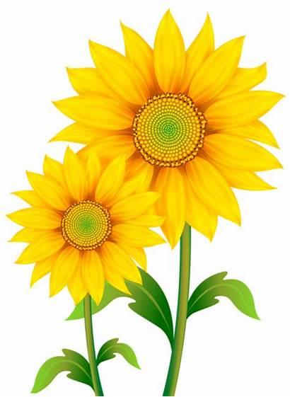 Clipart Transparent Sunflowers Flowers Yopriceville Previous