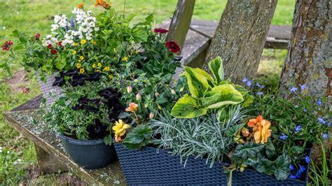 Pflanzen Die Viel Sonne Vertragen by Welche Balkonpflanzen Vertragen Viel Sonne Pflanzen Die