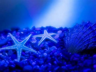 Star Ocean Sea Beauty Wallpapers Proslut Stars