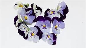 Getrocknete Blüten Kaufen : hornveilchen essbare bl ten kaufen ~ Orissabook.com Haus und Dekorationen