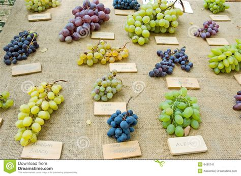 Grapes Different Kinds Stock Image Image Of Type Wooden