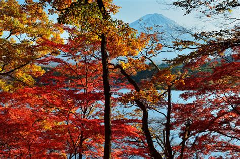 25+ Autumn Wallpapers, Backgrounds, Images, Pictures