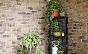 Zimmerpflanzen Für Dunkle Räume : 11 zimmerpflanzen f r dunkle ecken zimmerpflanzen ~ Michelbontemps.com Haus und Dekorationen