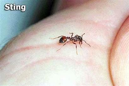 Fire Ant Sting Gifs Ants Stings Attack