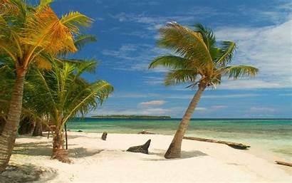 Palm Beach Tropical Trees Mexico Landscape Sand