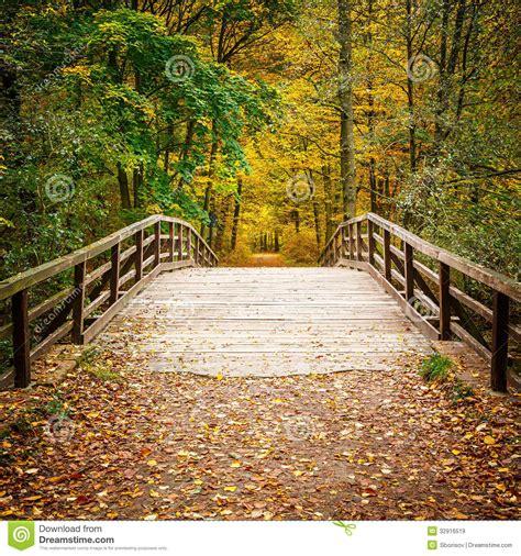 bridge  autumn forest stock image image  fresh alley