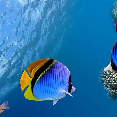 Fish Sea Ocean Under Water Coral Background