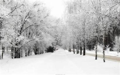 Winter Wallpapers Snow Backgrounds 4k Christmas Snowfall