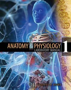 Anatomy  U0026 Physiology I Laboratory Manual
