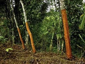 Cinnamon indonesia, Cinnamon supplier, Cinnamon producer ...