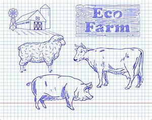 Butchering Beef Diagram  Pork  Lamb Stock Vector