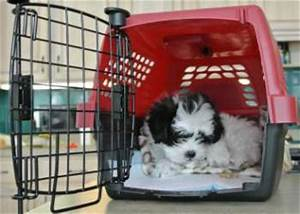 crate training small dogs a win win situation for you and With small dog training crate