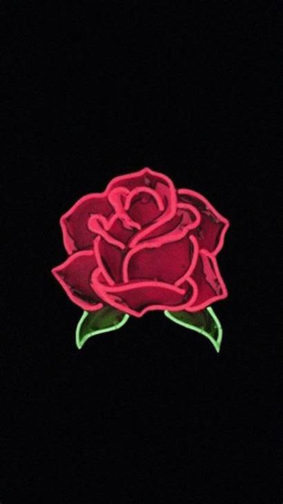 Aesthetic Rose Roses Wallpapers Backgrounds Flower Laptop