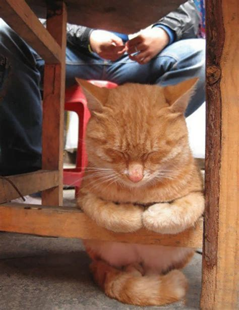 funny pictures  cats sleeping  crazy positions top