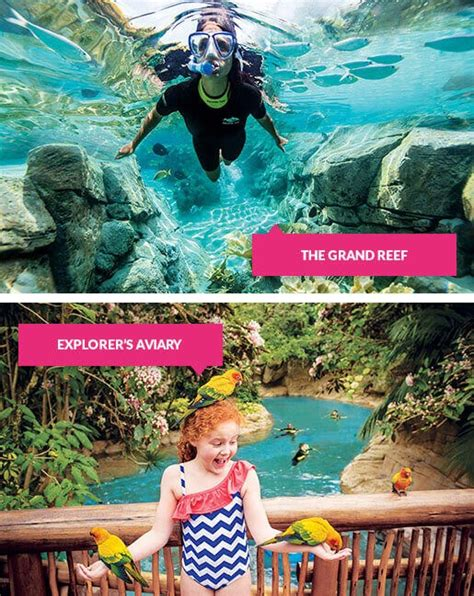 Discovery Cove Orlando Tickets by Discovery Cove Tickets Book Now For Just 163 10 Deposit