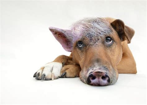 son   bitch  pig dog  photo  pixabay