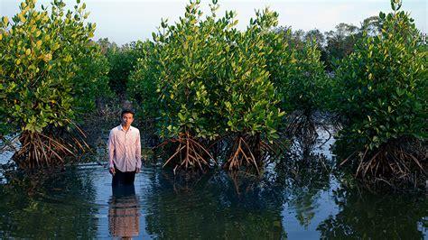 Thailand: Reclaiming mangroves for shrimp production ...