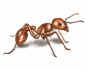 Interdimensional Anchorite  Dream Journal  Ants Capable Of