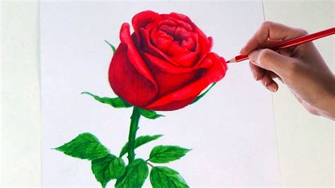 drawing  rose flower  simple colored pencils youtube