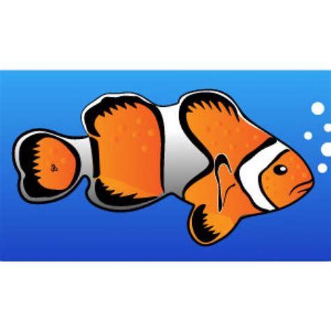 Clipart Da Scaricare Gratis Pesce Pagliaccio Clip Scaricare Vettori Gratis
