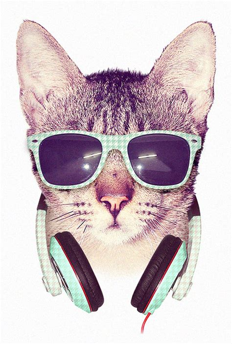 Cool Cat With Glasses Wallpaper Cool Cat By Dzeri On Deviantart