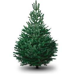 6ft nordman fir tree delivered