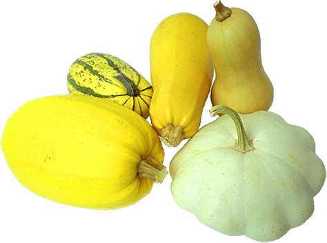 squash vegetable squashes fruits and vegetables