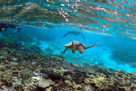 L'appel De L'australie Pour Sauver La Grande Barrière De