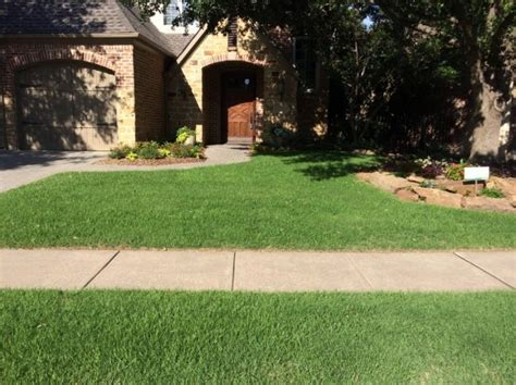Replacing Your Lawn? 3 Favorite Varieties For North
