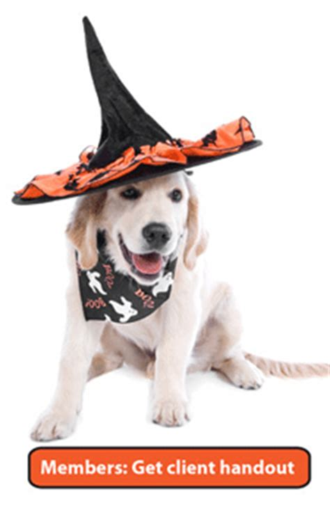 Make Halloween safe for your clients' pets