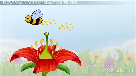 plant reproduction lesson  kids educational