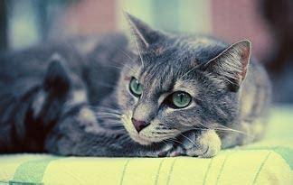 cat   diabetic coma animal planet