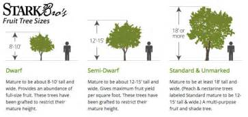 fruit tree sizes stark bro 39 s
