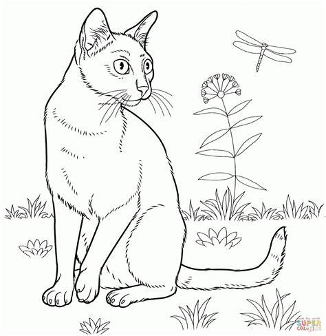katzenbilder zum ausdrucken kinderbilderdownload