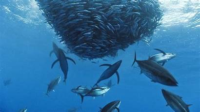 Fish Ocean Deep Fishing Saltwater Desktop Wallpapers