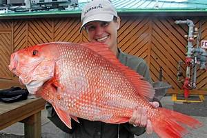 Red Snapper Count - Southern Boating