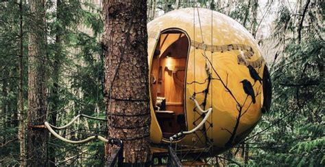 sleep   dreamy tree pods   bc forest