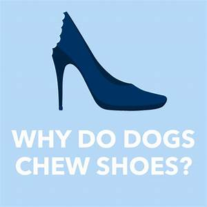 why does my dog chew my shoes