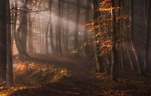 Nature, Landscape, Sun, Rays, Forest, Path, Leaves, Trees, Fall, Mist, Sunlight, Wallpapers, Hd