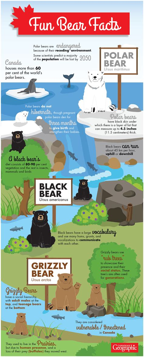 Infographic Fun Facts About Canadas Bear Species