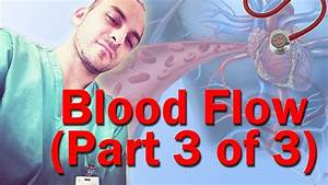 Blood Flow Through The Heart Made Easy  Part 3 Of 3