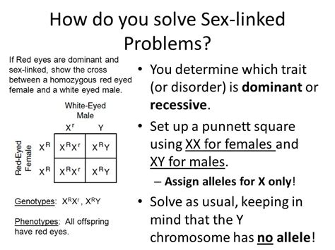 How To Do A Sex Linked Punnett Square Nishiohmiya Golfcom