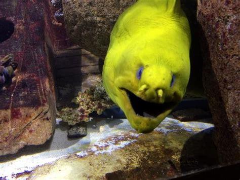 aquarium d amneville photo de aquarium d amneville amneville tripadvisor