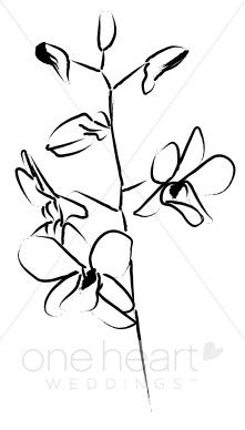 dendrobium accent sketch wedding orchid clipart