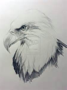 Bald Eagle Drawings Sketches