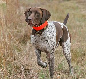 5 Tips on How to Choose the Best Training Collars for Bird ...