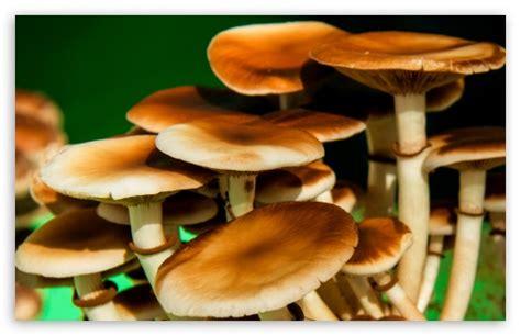Mushrooms 4k Hd Desktop Wallpaper For 4k Ultra Hd Tv