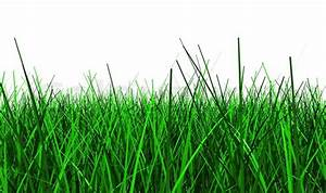 3d illustration of green grass isolated on white ...