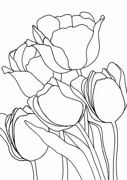 Stained Glass Patterns Tulip Flower Drawing Line