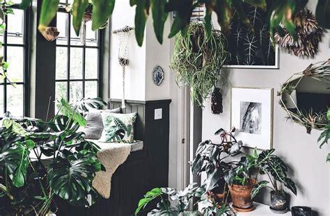 instagram plant inspiration indoor zen ions negative health jungle benefits features accounts houseplants tweet